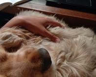 Snuggles at laptop